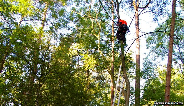Speakers are installed in the forest canopy