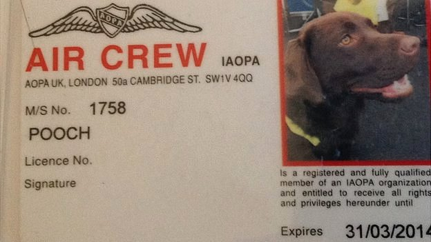 "Callie the dog's ""crew card"""