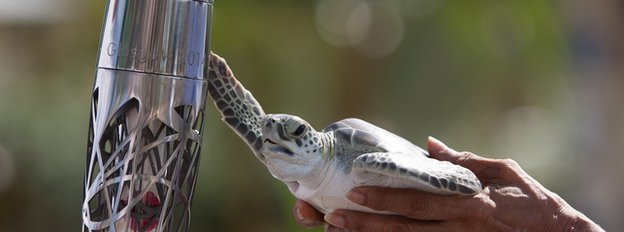 A turtle greets the baton in the Cayman Islands
