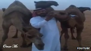 Screengrab of a man kissing a camel