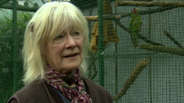 Owner Anthea Forde said the incident would have traumatised the birds