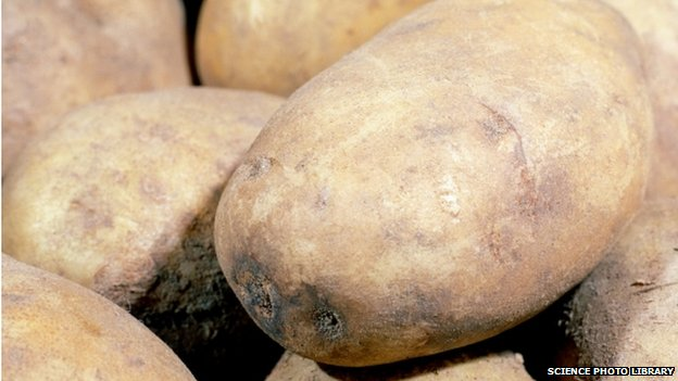 File photo of a potato