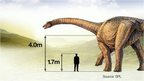 Graphic showing size of dinosaur