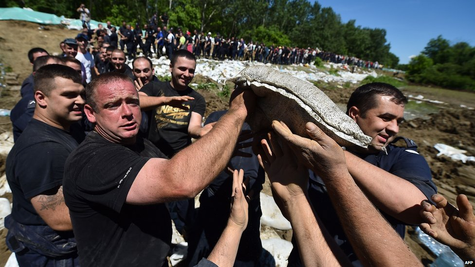 Volunteers and police pass sandbags to reinforce bank of River Sava near Sabac, west of Belgrade. 19 May 2014