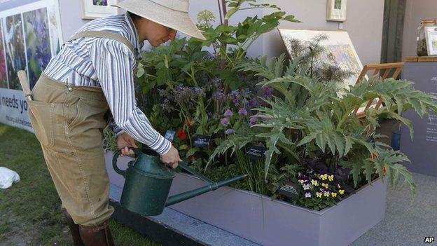 Gardener watering