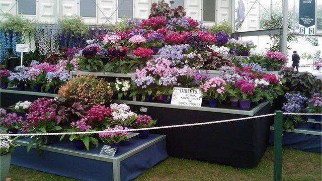 Bbc news chelsea flower show nursery 39 s 25th chelsea - Chelsea flower show gold medals ...