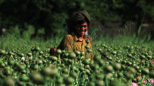 Opium poppies remain one of the most profitable crops in Afghanistan
