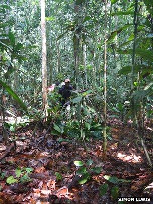 Congo peatland