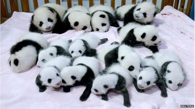 Giant panda cubs lie in a crib at Chengdu Research Base of Giant Panda Breeding in Chengdu on 23 September.