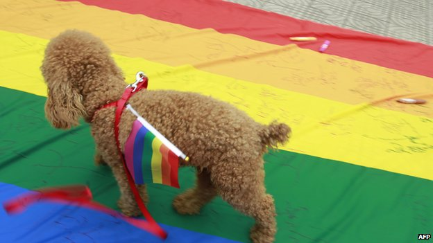 A dog walks with a rainbow flag, a symbol for the homosexuals, on its back as its owners attend an anti-discrimination parade in Changsha, central China's Hunan province on 17 May 2013