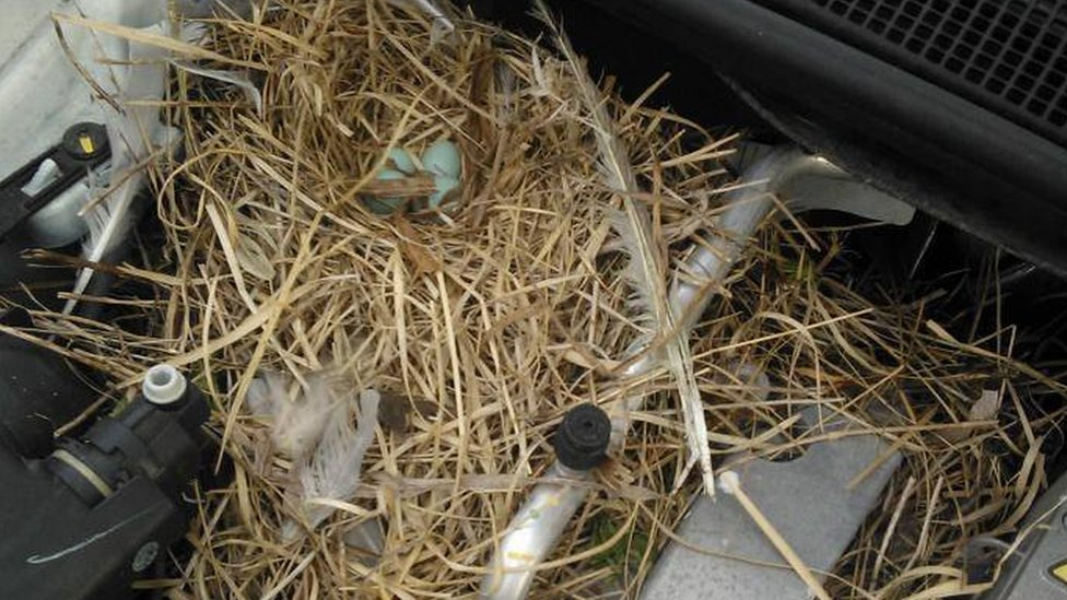 Nest in a car