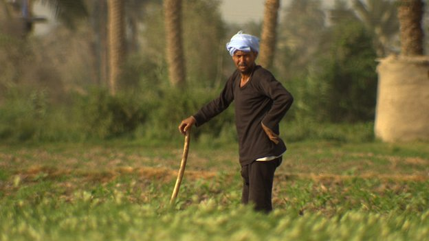 Egyptian farmer