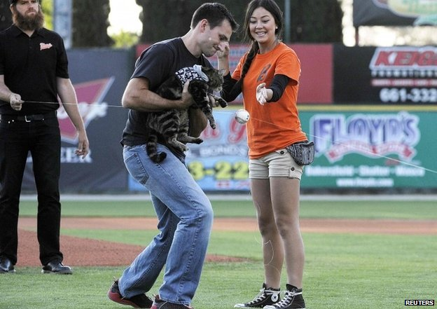 Tara the cat 'throws' first pitch