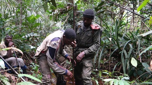 Expedition team explores peatland in Congo-Brazzaville