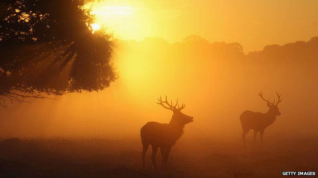 Stags in Richmond Park, London