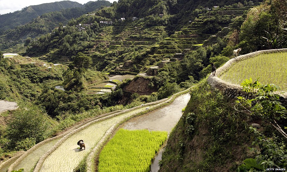 Rice terraces in Ifugao province (2008)