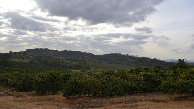 Coffee farm landscape