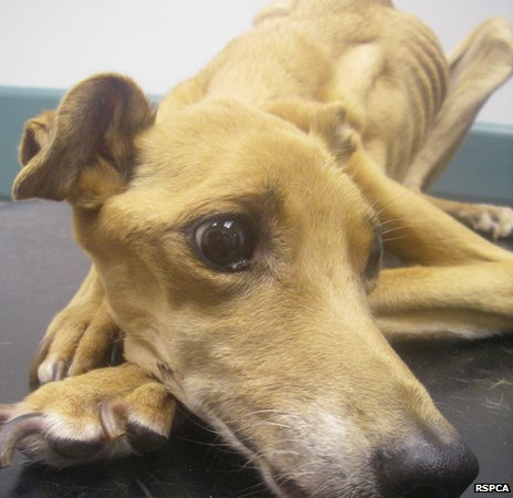 Fly was severely emaciated when she was found