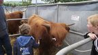 Boys at Fife Show