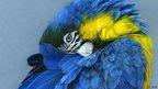 L'Oiseau Bleu  by Corinne Dupeyrat