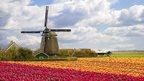 windmill and bulb field