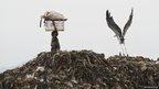 A woman carries recyclable materials on her head as an Adjutant stork flies past