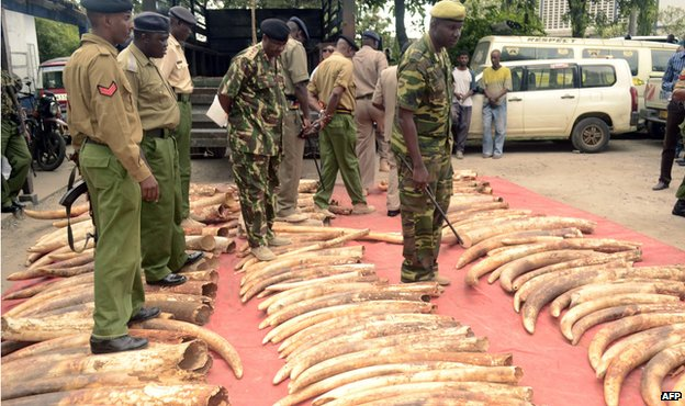 Kenyan police officers look on June 5, 2014 at 302 pieces of ivory, including 228 elephant tusks, found and seized the day before in a warehouse during a raid in the port city of Mombosa