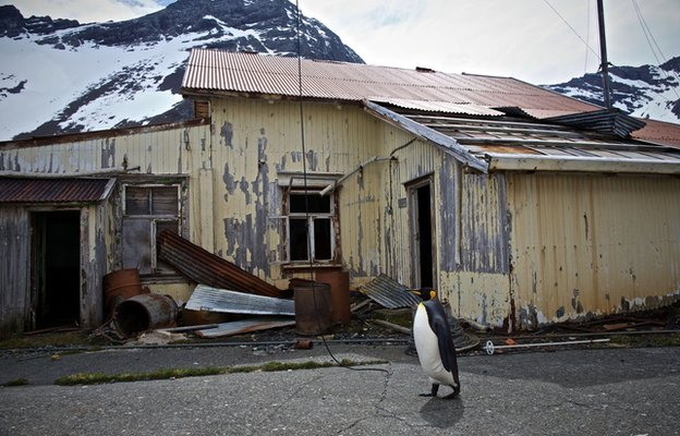 South Georgia: The lost whaling station at the end of the world