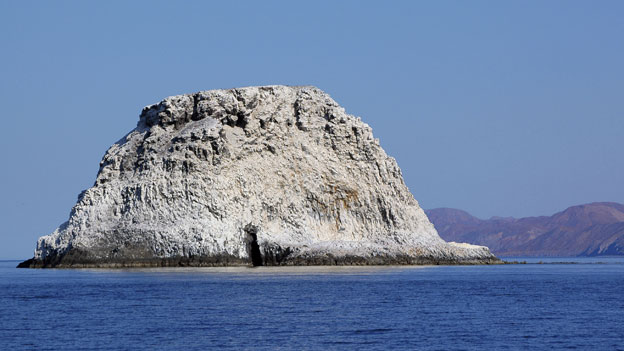 Island covered in guano