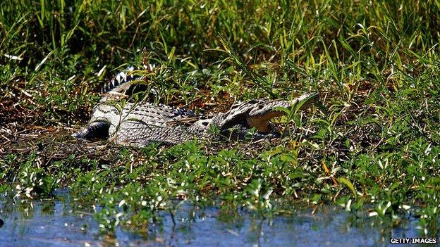 General view of a Salt Water Crocodile in Kakadu National Park, Northern Territories, Australia