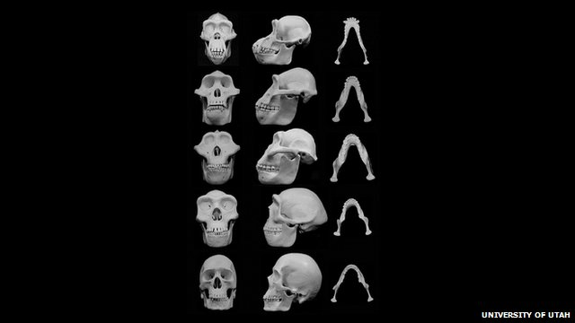 Facial bones evolving over time