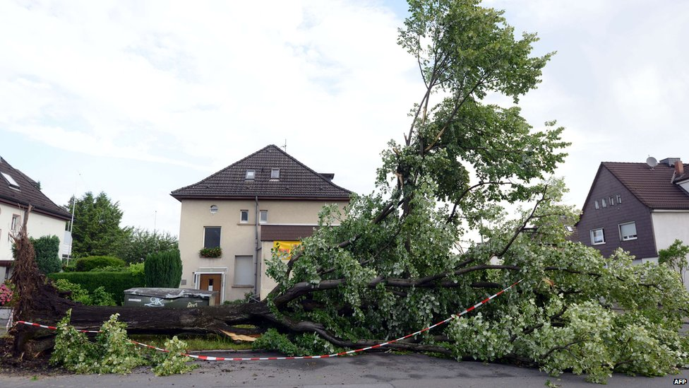 Uprooted tree lies in a street in Gelsenkirchen, Germany. 10 June 2014