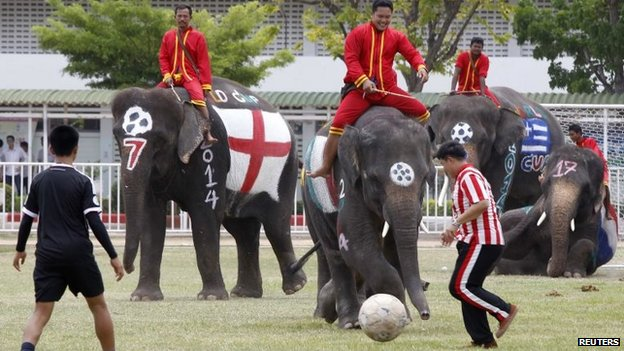 Thai students play soccer with elephants at a school in Thailand's Ayutthaya province June 9