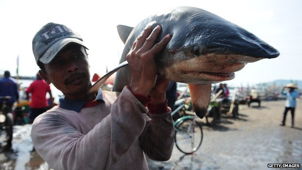 A worker carries a shark at Muncar Port on 25 May, 2014 in Banyuwangi, Indonesia