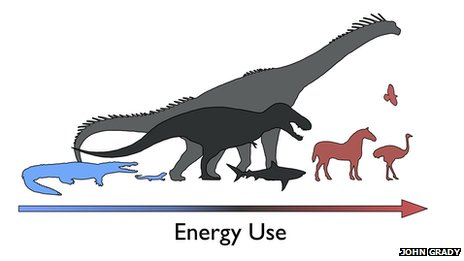 dinosaurs as mesotherms