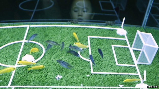 A child watches fish swim over a miniature football pitch at the Shanghai Ocean Aquarium