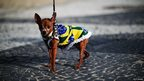 Dog dressed in the Brazilian flag on the seafront of Copacabana beach in Rio de Janeiro