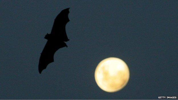 Bat (file pic)