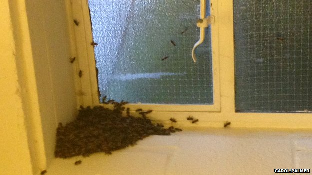 Bees on a windowsill