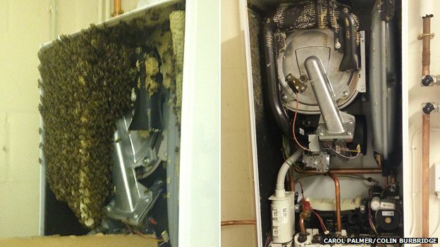 Bees in a boiler