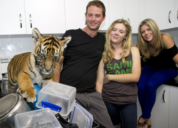 Tiger playing with the washing up