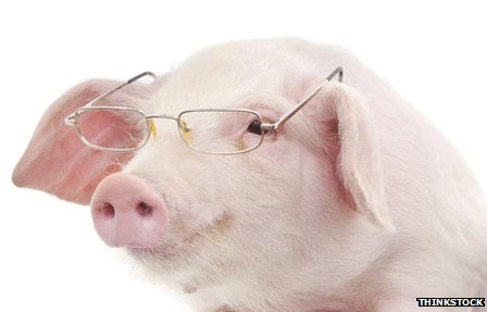 A pig with glasses