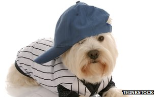 A terrier in a hat and jacket