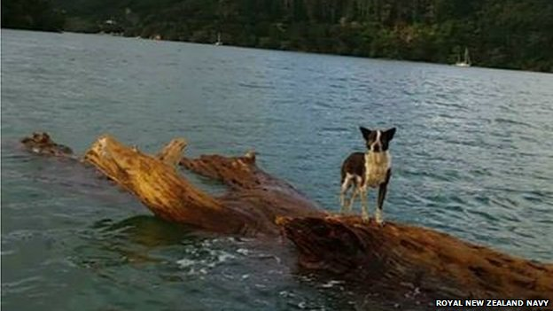 Tiny the dog found off Great Barrier Island in New Zealand