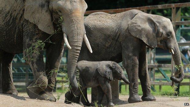 Baby elephant at Howletts