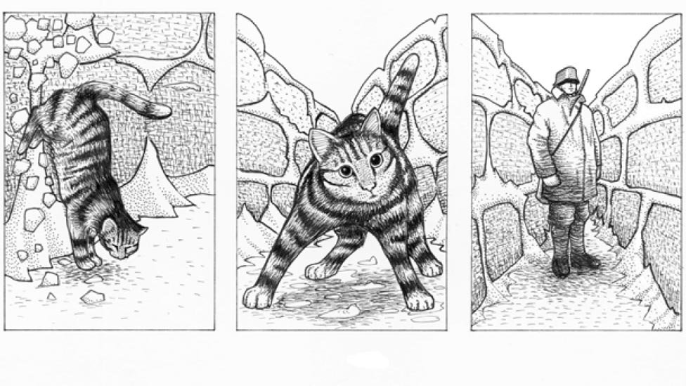 Illustrations from Il Gatto