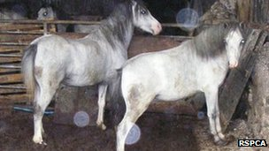 Horses at Pencarth Uchaf Farm