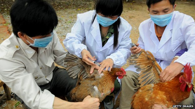 Scientists testing chickens