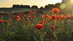 Bright red poppies in the foreground, rolling green hills behind and a house darkened in the background. The rays from the sunrise beam from the right hand corner of the photo.