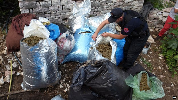 Albanian police officers seize considerable amounts of marijuana in  Lazarat on 20 June 2014